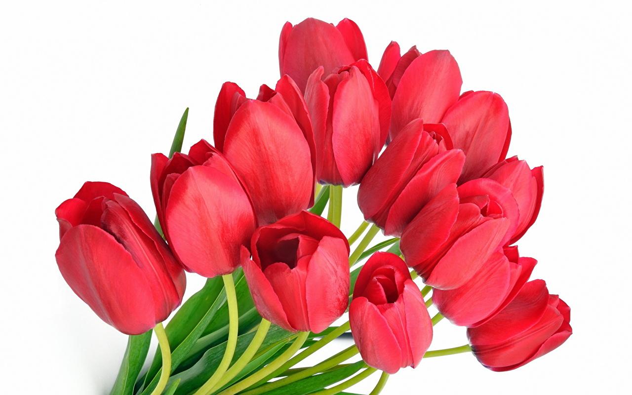 столешницы поздравление любимого коллектива с 8 марта токсическими веществами